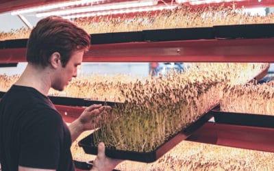 Skaalautuvaa salaattibisnestä Stadissa